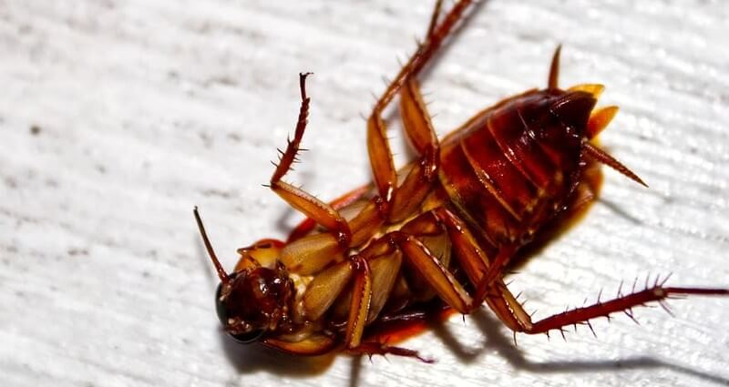 Roach Control Service In Manassas