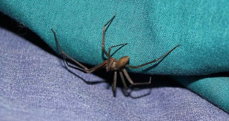 spider control & extermination services in Manassas