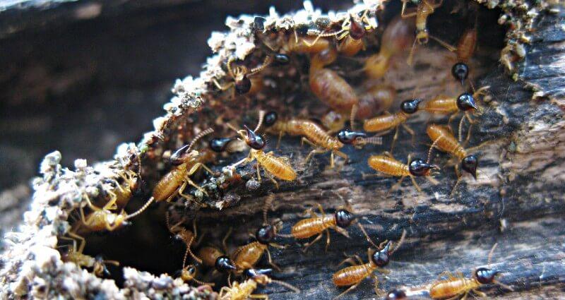 termite control & treatment in Manassas VA