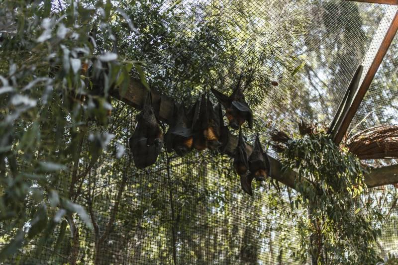 Bat Control In Manassas VA