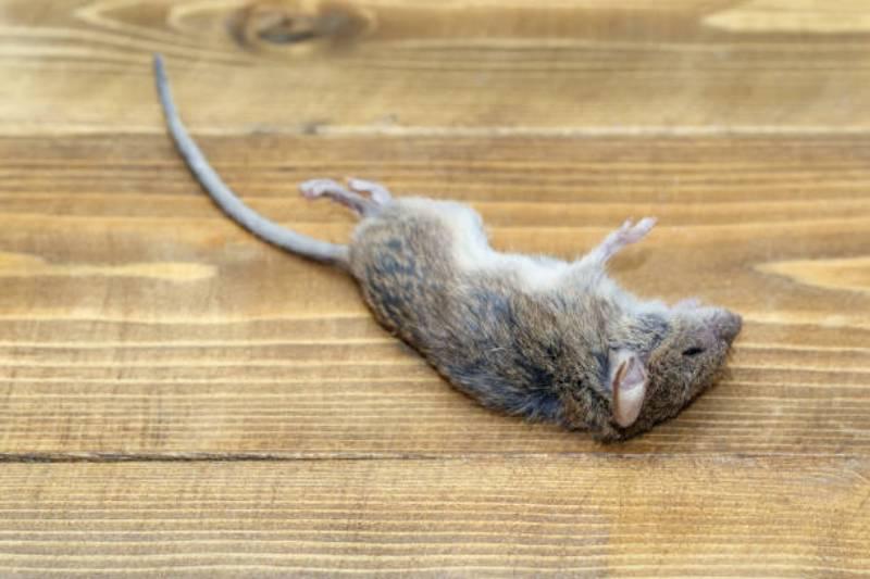 Dead Animal Removal Service In Manassas VA