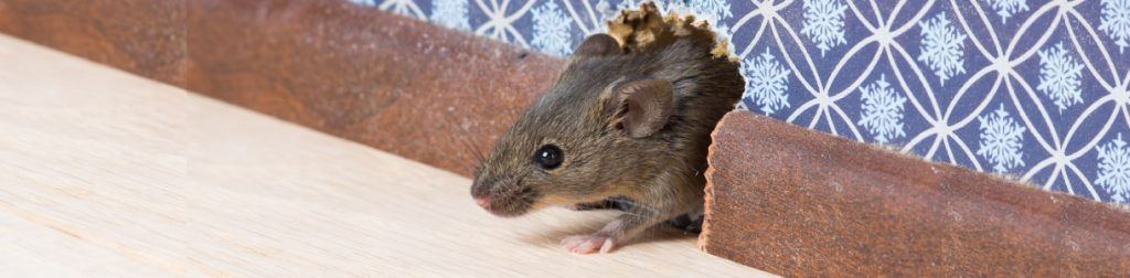 Rat & Mice Control Services In