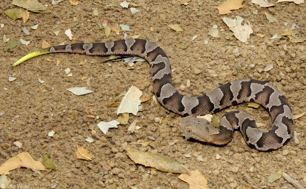 Snake Control & Trapping Service In Manassas